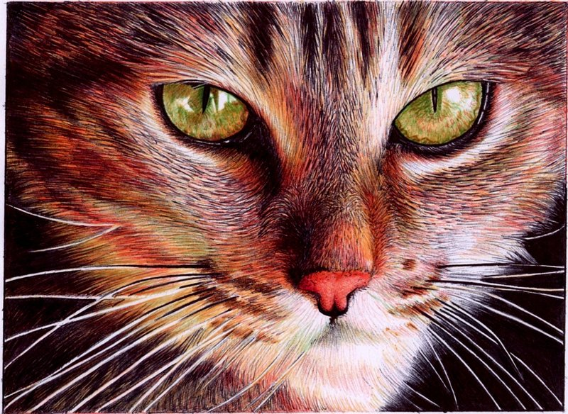 cat_face___bic_ballpoint_pen_by_vianaarts-d4n9hyy