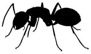 RAD-Ant